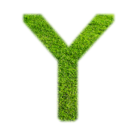 uppercase: Y uppercase alphabet made of grass texture, isolated on white background