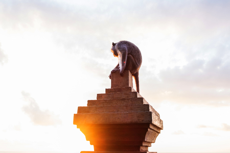 biped: Monkey sitting on concrete pillar with flare against sunset