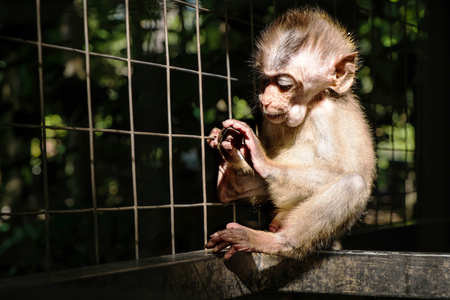 abstract gorilla: Little monkey in cage, selective focus, with dark dramatic environmanet Stock Photo
