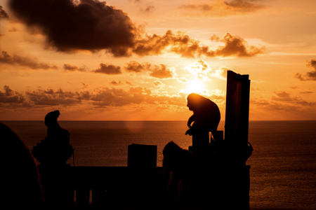 biped: Silhouette monkeys with flare against sunset at Bali Stock Photo