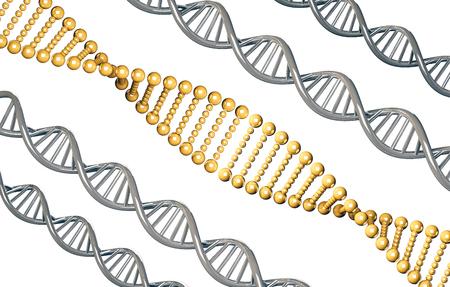 흰색 배경에 고립 된 실버 DNA와 황금 DNA, 우성 유전자,