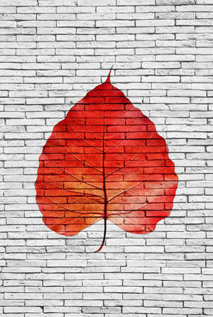 pipal: Red pipal leaf on bricks wall