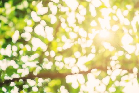 flecks: Abstract green Bokeh background with sunlight