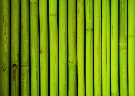 bamboo texture: Green bamboo fence texture, bamboo background, texture background, bamboo texture