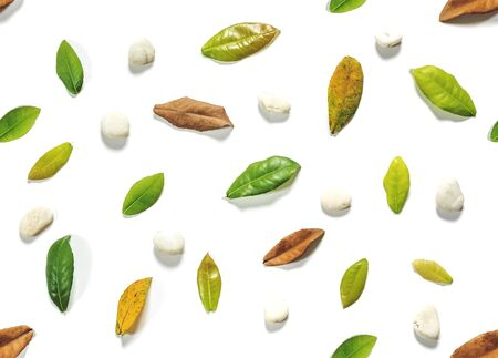 white pebble: Seamless green and brown leaves with white pebble stone on white background