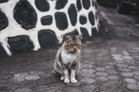 downcast: Poor homeless fighter cat Stock Photo
