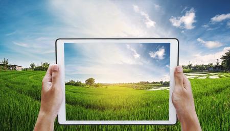 tableta digital en la mano con el panorama campo de arroz en la puesta del sol, las manos de agricultores locales