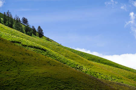 Green hills and tree with blue sky, selective focus