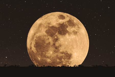 noche y luna: Full moon at night with stars with silhouette glass lawn. full moon background
