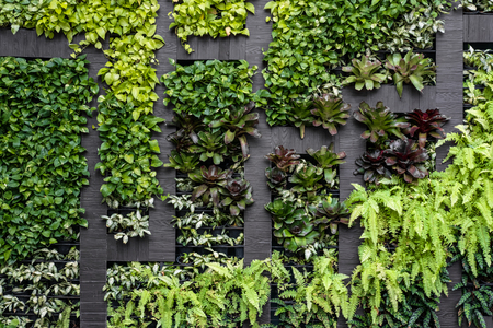 Green wall, eco friendly vertical garden Stock Photo - 68432739