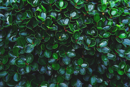 round: Green leaves plant growing in wild, the tropical forest plant