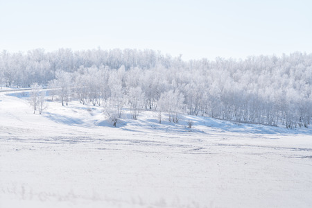 Winter landscape, white snow field with white forest in winter