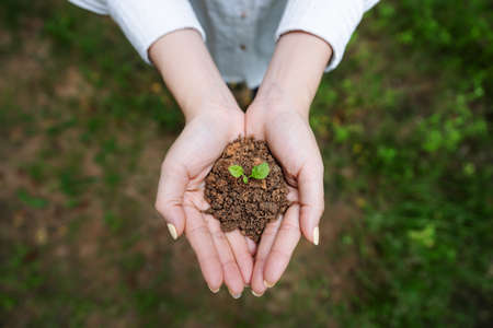 Woman's hand holding sprout plant, seedling plant in ground. Top view. Saving earth and planting trees Imagens