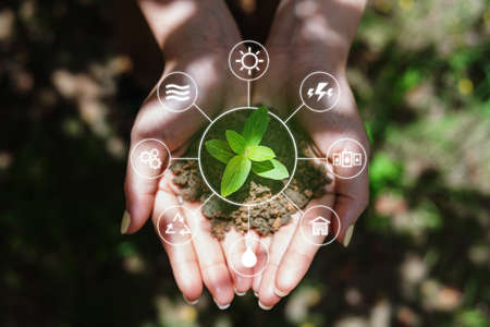 Clean energy and Natural energy resources. Woman hand holding sprout, with energy resource icons Foto de archivo