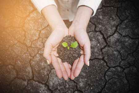 Hand holding growing plant over arid earth. Nature and ecosystem concept