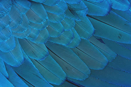 Close-up Colorful blue feather pattern