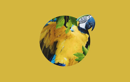 Digital collage 3D modern art, Yellow Macaw parrot, on yellow background