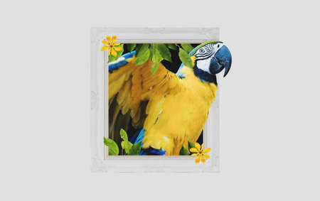 Digital collage 3D modern art, Colorful Macaw parrot, get out of picture frame