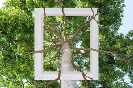 Big tree and branches with picture frame 版權商用圖片