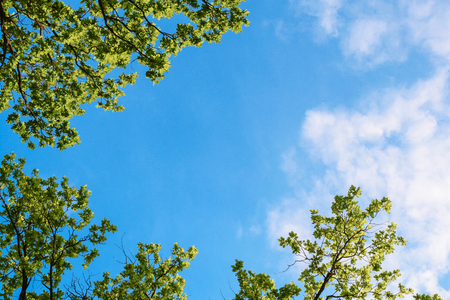 brunches with green leaves against blue sky