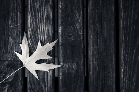 maple leaf on a wooden background with copy space. Black and white photography. Stock fotó