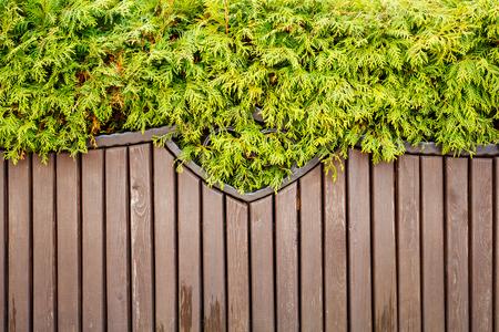 green vegetation hangs over a wooden bench 版權商用圖片 - 91082045