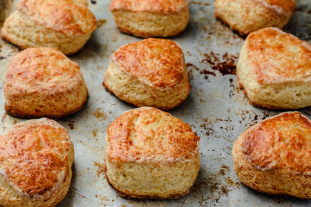 freshly baked English cheese buns scones on a mettalic baking sheet.