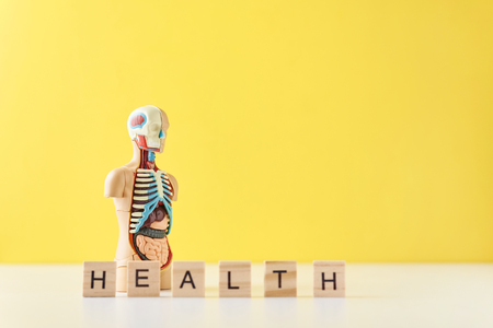 Human anatomy mannequin with internal organs and word HEALTH on yellow background. Medical health concept Stock Photo