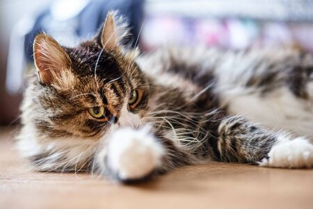 Young cute domestic cat at home, close up