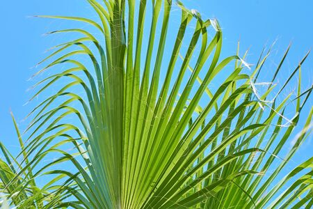 Palm leaves against blue sky background, close up 스톡 콘텐츠