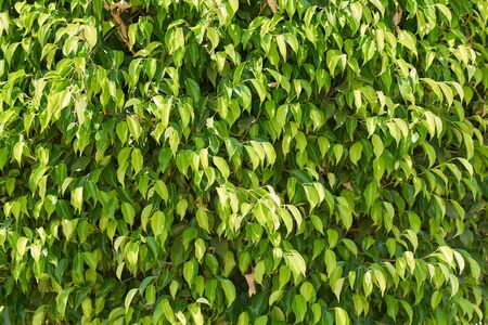 Green plant foliage as background. Abstract texture