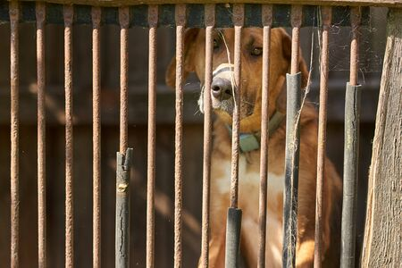 Sad brown dog behind the fence. Alone holmeless dog in cage