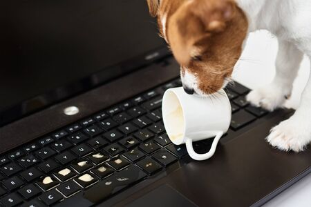 Dog spilled coffee on computer laptop keyboard. Damage property from pet