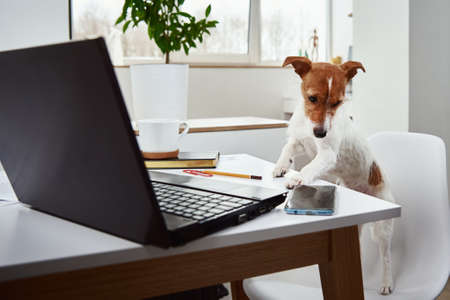 Dog working on laptop at home office. Remote work concept
