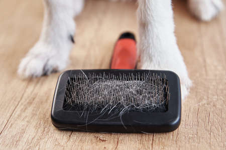 Pet brushing. Dog paws and comb with hairs, closeup