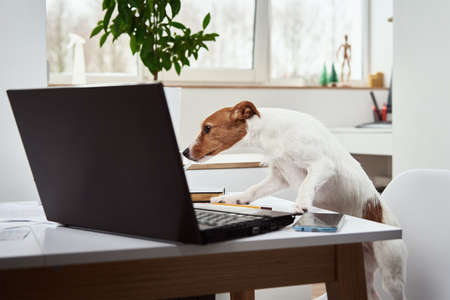 Dog work on laptop at home office. Remote work concept Zdjęcie Seryjne