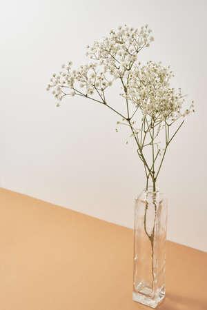 Plant in glass vase on pastel beige background. Minimal style decor Archivio Fotografico