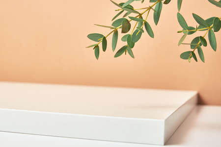 Empty podium with plant leaves on beige pastel background. Mock up geometry shape podium for product display