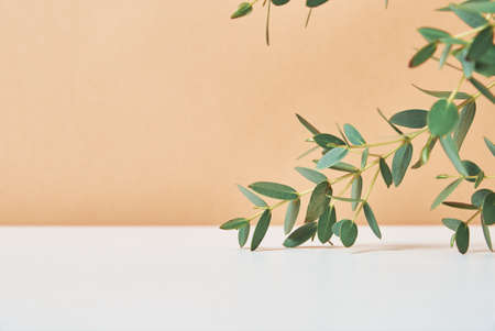 Abstract background. Plant leaves against neige pastel background with copy space