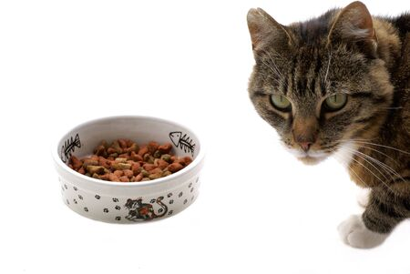 catfood: Cat with food against white background.