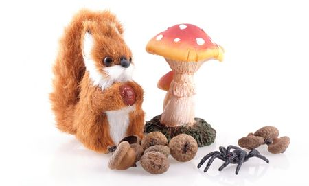 Squirrel, spider, toadstool and acorns on a white background. photo