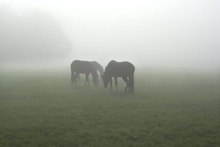 Three horses standing in a foggy meadow. Stock Photo - 3841021