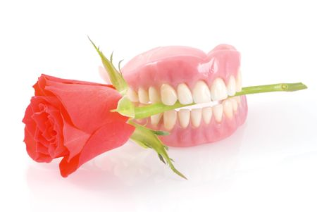 Dentures holding red rose romanticly; on a white background.