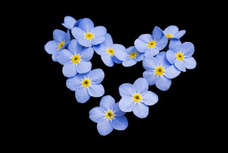 Forget me not, beatiful little flowers in the shape of a heart; isolated on black.