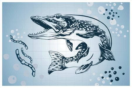 pike: Pike fish vector hand-drawn illustration