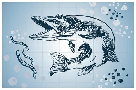 Pike pesce illustrazione vettoriale disegnati a mano