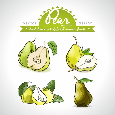 Pear. Vector hand drawn collection of sketch fresh fruits illustration. Isolated