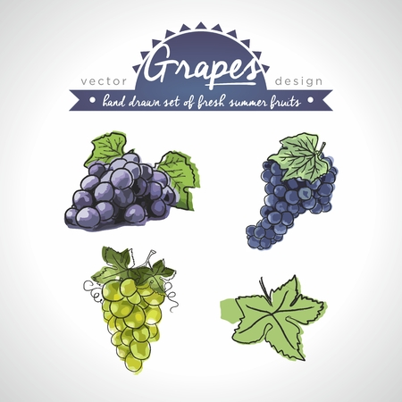 Grapes. Vector hand drawn collection of sketch fresh fruits illustration. Isolated Standard-Bild - 120240901
