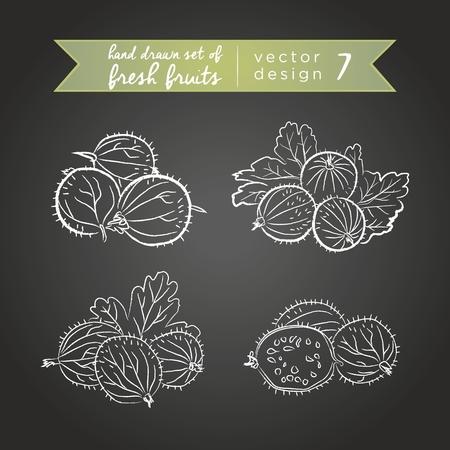 Gooseberry. Set of fresh fruits, whole, half and bitten with leaf. Vector illustration. Isolated on blackboard Vektorgrafik