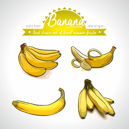 Banana. Vector Illustration Categories: Isolated Standard-Bild - 123717723